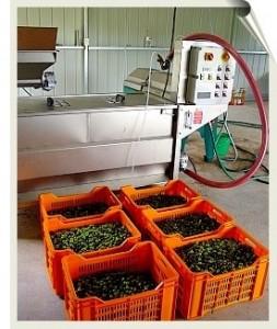 olivepress01sc
