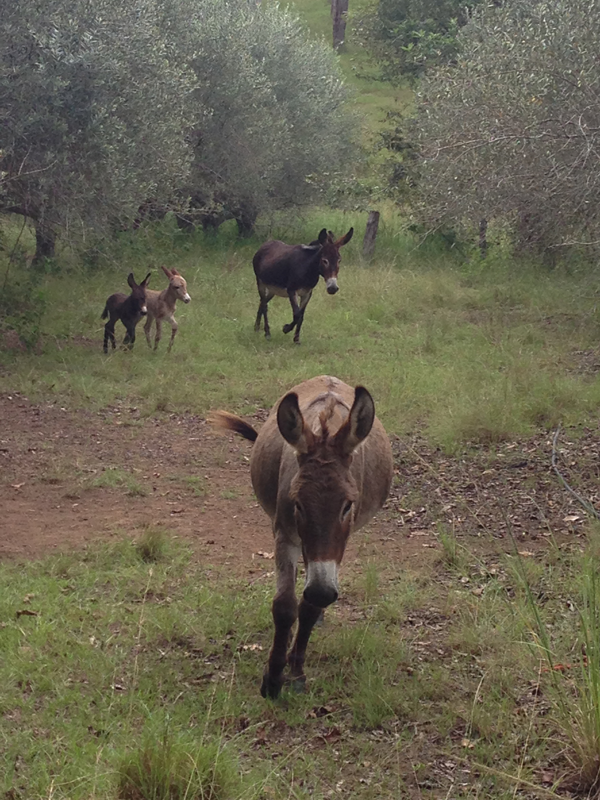 obi-obi-essentials-donkey-photo
